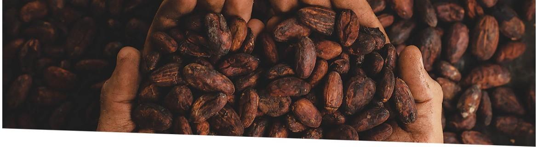 Chocolates Ecológicos | El viejo Hortelano. Supermercado Ecológico