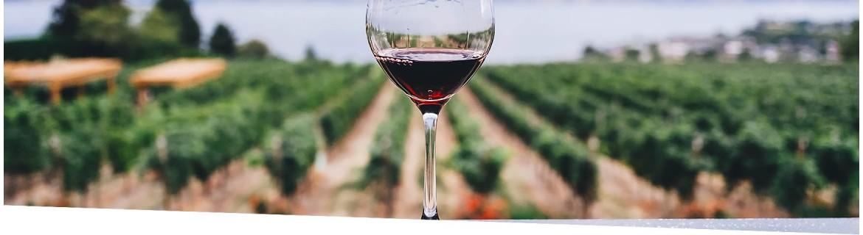 Vinos y Bebidas alcohólicas Ecológicas | El Viejo Hortelano
